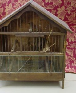Oude vogelkooi-1