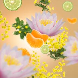 aroma-dstress-260×260
