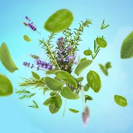 aroma-focus-260×260