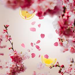 cerisier-en-fleurs-260×260