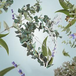 fraicheur-eucalyptus-260×260